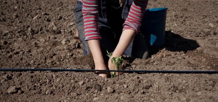 Plantem la llavor i ajudem a créixer a l'economia social i solidària | Carles Palacio