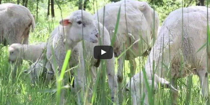 <h2>A les Vilas de Pruit fent aquest vídeo per a Orgull Pagès</h2>